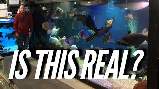 Download BIGGEST AFRICAN CICHLID HATCHERY AND MONSTER FISH WITH HUGE TANKS! | Jay Wilson Video