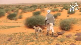 Download الصيد بالكلاب السلوقية العربية في السودان Video