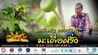 Download ตะวันรุ่ง : มะเดื่อฝรั่ง สวน FIGS อโรคยา โดย เสริมรัฐ อติกนิษฐ จ.ชลบุรี Video