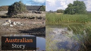 Download How Peter Andrews rejuvenates drought-struck land | Australian Story Video