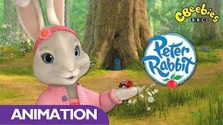 Download CBeebies | Peter Rabbit | Spring Is Here! Video