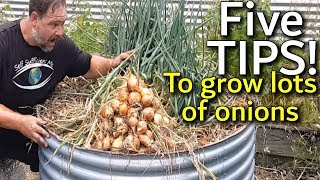 Download 5 Tips How to Grow a Ton of Onions in One Container or Garden Bed Video