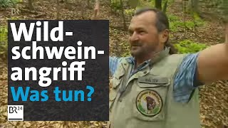 Download Wildschwein greift an – was tun? | BR24 Video