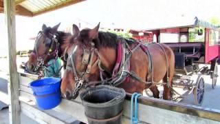 Download Amish Village Lancaster, Pennsylvania Video