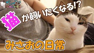 Download すごく優しい猫みさおの日常♪ 見たら猫が飼いたくなるかも!? Video