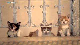 Download Kedi: A documentary about Istanbul's cats Video