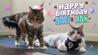 Download OUR CAT'S 5TH BIRTHDAY!! Video