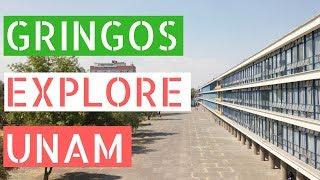 Download Gringos Explore The Largest University in Latin America (UNAM) Video