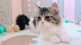 Download 女主人为小奶猫搭建了豪华育婴房,大猫们表示很不服:我们也要玩! Video