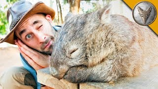 Download DON'T WAKE the WOMBAT?! Video