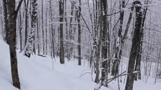 Download Snow Falling, 5 hrs Relaxing Music Video
