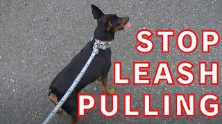 Download 犬の引っ張り癖の直し方 Video