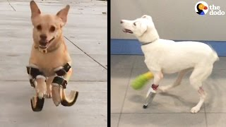 Download Dogs Walk For The First Time Using 3D Printing | The Dodo Video
