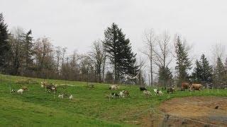 Download A Small Scale Integrated Livestock Farm Video