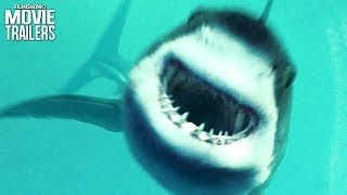Download Sharks Attack in Open Water 3: Cage Dive Trailer Video