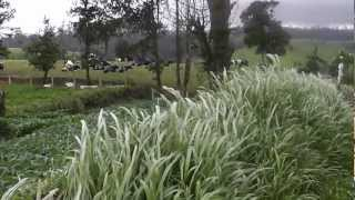 Download Ambewela Farm Sri Lanka a Picturesque Place Video