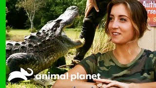 Download Alligator Catch Inspires A New Volunteer To Join The Everglades Holiday Park | Gator Boys Video