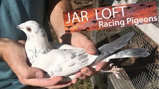Download 10 incredible things about homing pigeons Video