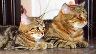 Download Cute Kittens and Cats together Video