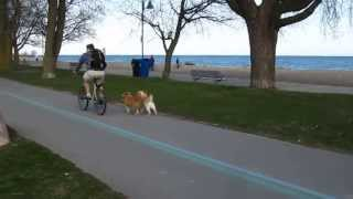 Download Dog Bike Tow Leash Right Side Mount Tandem Dogs On City Bike Paths Demo And Setup Commentary Video