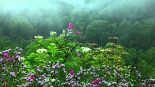 Download Rain Sounds with Tibetan Singing Bowls and Birds chirping [ Sleep Music ] Video