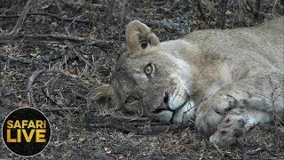 Download safariLIVE - Sunrise Safari - October 17, 2018 Video