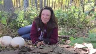 Download Giant Puffball MushroomZ Video