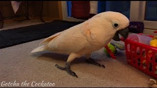 Download What is this crazy bird talking about?? LOL Video