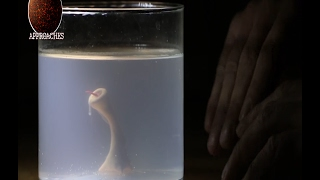 Download Man creates Monster in his basement with Sperm and Chicken Egg - Home Alchemy! Video