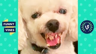 Download TRY NOT TO LAUGH - Funny Pet Videos! Video