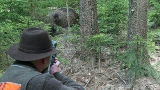 Download Top Best Shots of Wild Boar Hunting,Wildsau Jagd,Chasse Au Sanglier Video