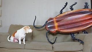Download Dog vs Giant Cockroach Prank: Funny Dog Maymo Video