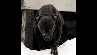 Download THE HULK LIFE: ALL OF MY DOGS BITE IM IN TROUBLE! its like an eclispe! Video