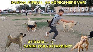 Download Korsan Pitbull ve Setter İle Sokak Köpeklerin Arasına Girdik Canımı Zor Kurtardım!! Video