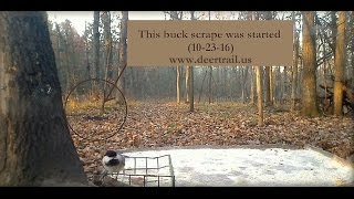 Download Buck Scrape (First Night) Video
