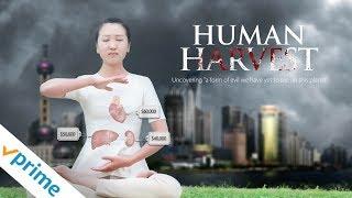Download Human Harvest - Trailer Video