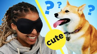 Download People Guess The Breed Of Dogs By Petting Them Video
