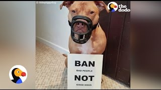 Download Pit Bull Taken by Police Is Back Home With Her Dad   The Dodo Video