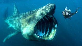 Download 10 Przerażających ZWIERZĄT na ziemi Video
