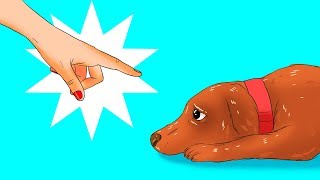Download 12 Harmful Things You Do to Your Dog Without Realizing It Video