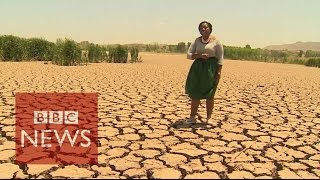 Download Worst drought in 30 years hits Sout Africa - BBC News Video