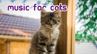 Download Cat Sleep Music - Kitten Lullabies for Feline Relaxation Video