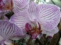 Download ORKİDE NEDİR ? -What is orchid ? - Was ist ein Orchidee ? Video