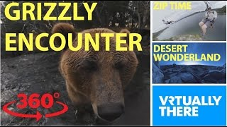 Download An adorable encounter with a grizzly bear in VR, scream down a crazy zipline Video