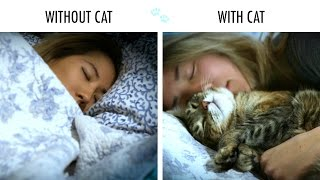 Download Without Cat Vs. With Cat Video