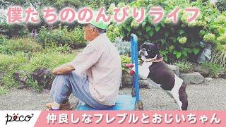 Download おじいちゃんとフレブルのほのぼのライフ👴🐶【PECO TV】 Video