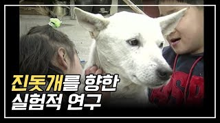 Download 우리나라 혈통 진돗개를 향한 실험적연구 / An Experimental Study on the Jindo Dogs of Korean descent Video