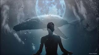Download full moon meditation FEBRUARY 2020 - whales meditation 🐋 Video