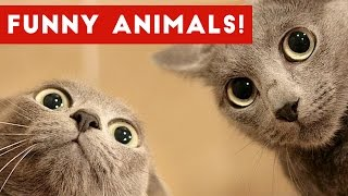 Download Funniest Pet Fails & Bloopers Compilation November 2016 | Funny Pet Videos Video