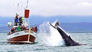 Download Whale Watching Húsavík Iceland – Walbeobachtung Island Video